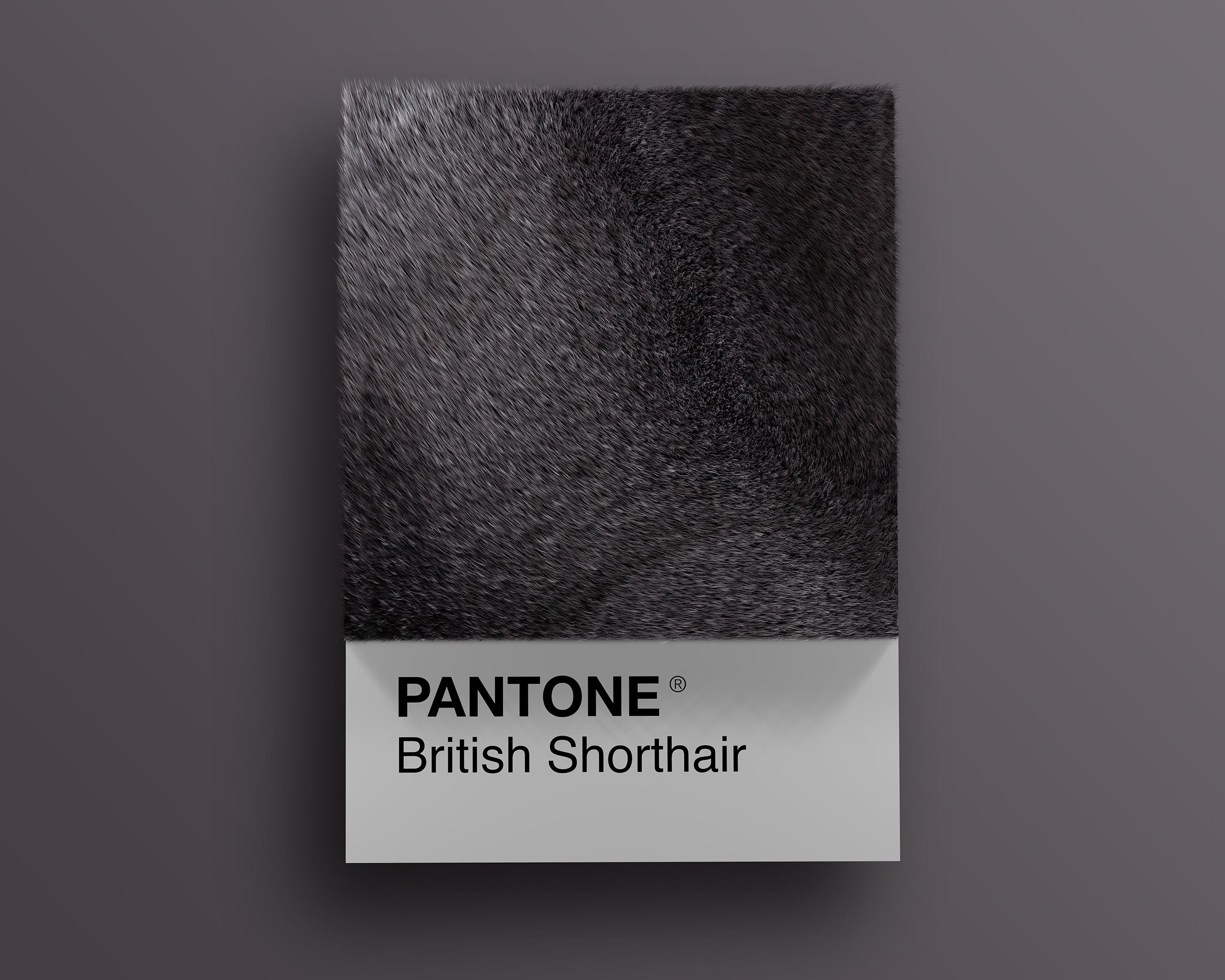 British as Pantone