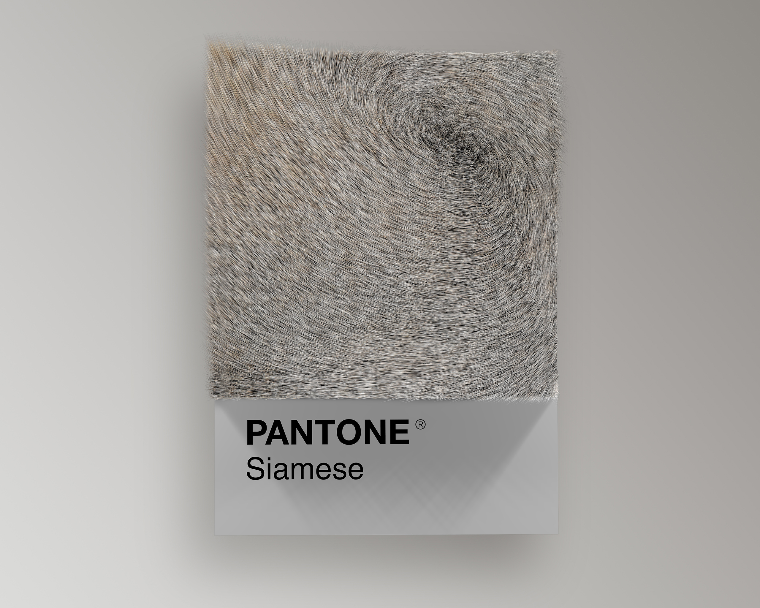 Siamese Cat as Pantone
