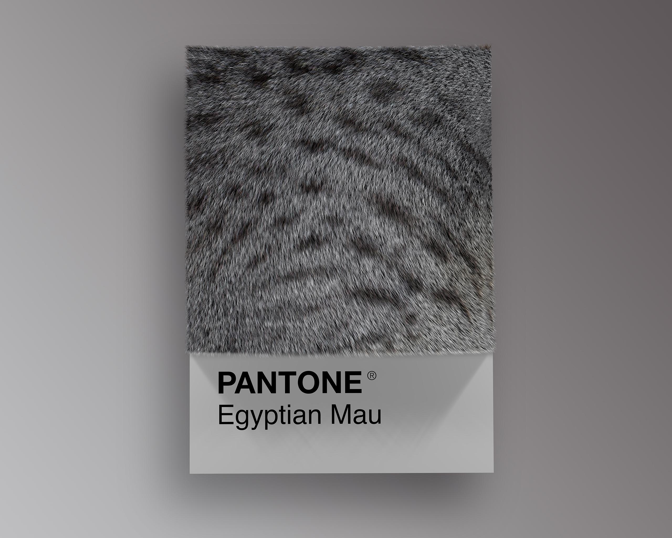 Egyptian Mau as Pantone