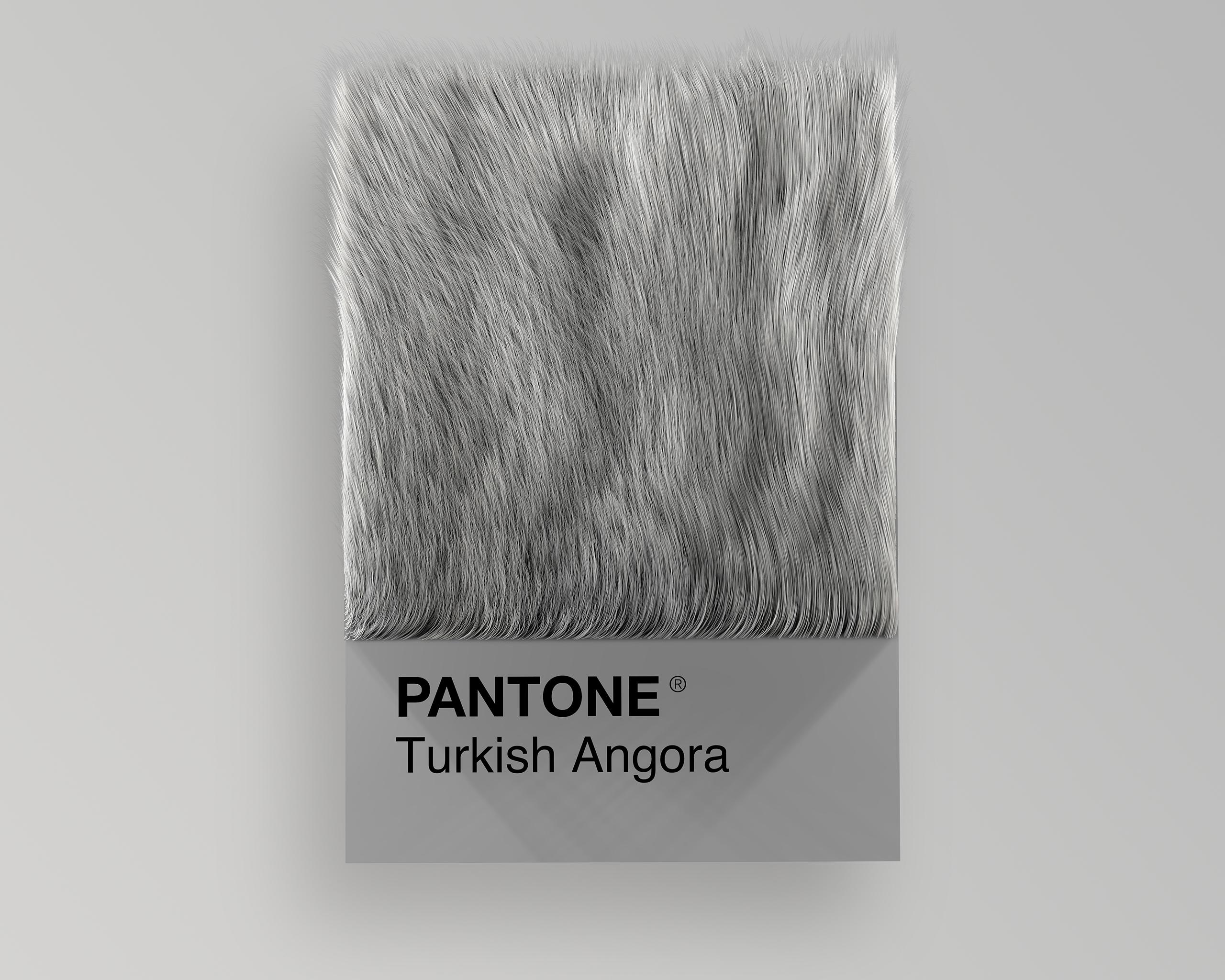 Turkish Angora as Pantone